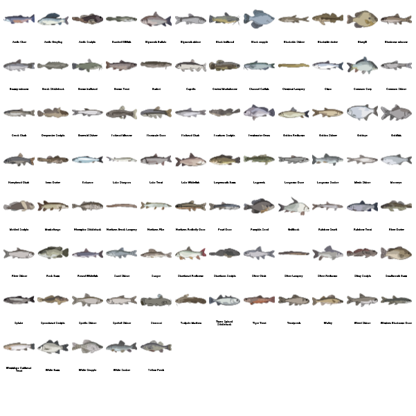 Freshwater Fishes Preview Large