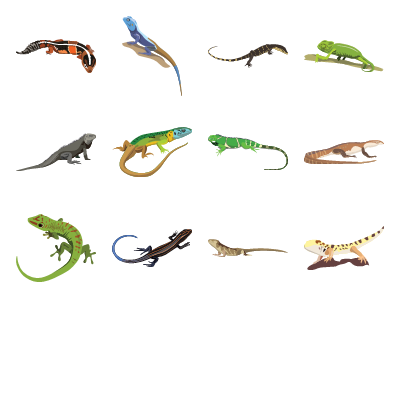 Lizards Preview Small