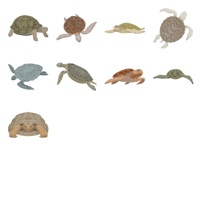 Turtles Preview Small