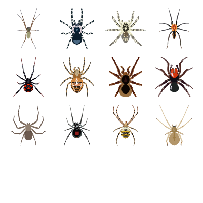 Spiders Preview Small