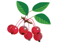 Crabapple Red