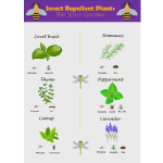 Insect Repellent Plants thumb