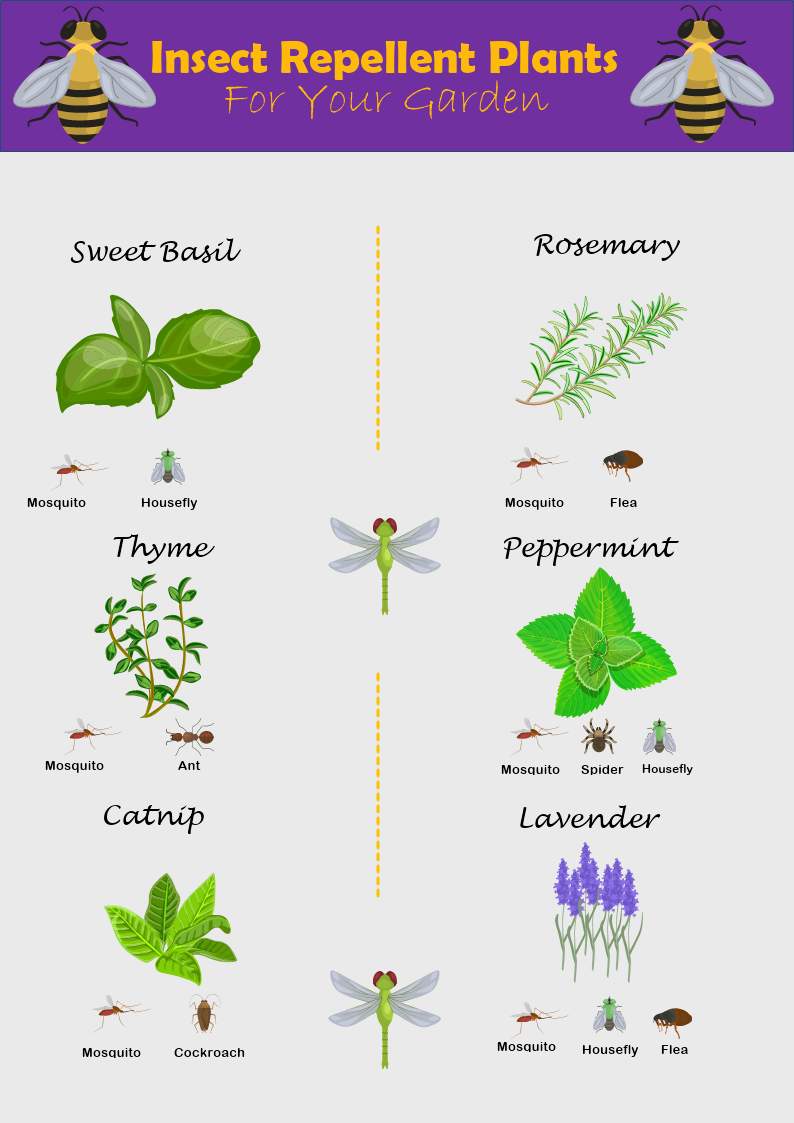 Insect Repellent Plants Infographic Template Mydraw