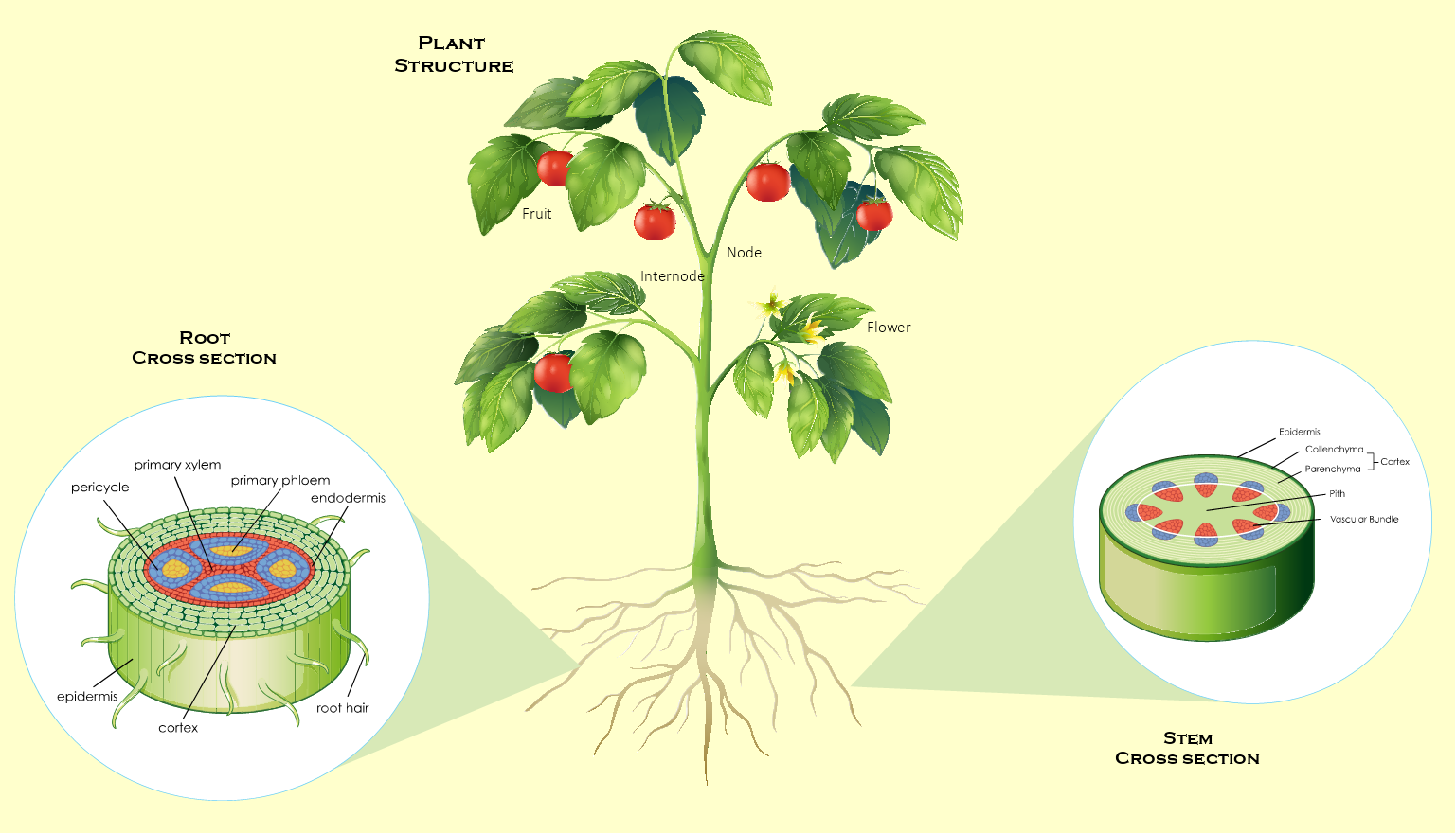Plant Structure Template